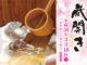 2018月3月18日(日) 富士錦蔵開き  the opening of a storehouse  of FUJINISHIKI sake brewery